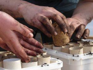 hands close up planting